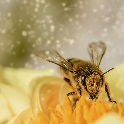 la-ruche-des-puys
